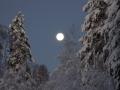 Fullmåne i Vinterlandskap